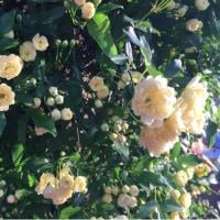 我が家の春の花  )^o^(