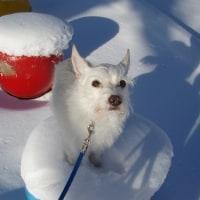雪と寒の中で(近況片)