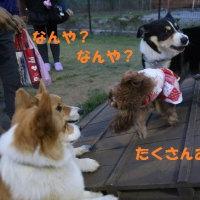 コーギー牧場再び\(^o^)/