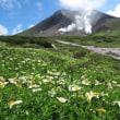 【大雪山国立公園・旭岳情報】雨上がりのキラキラの正体