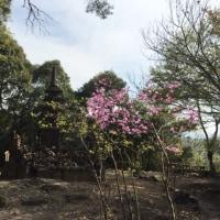 朝日山 と  莵道陵  と 太閤堤