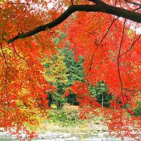 奥多摩渓谷紅葉散歩