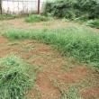 2017年7月9日 今日は、畑の草取りです。