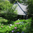 鎌倉を知る ーー 長谷寺の紫陽花 ーー