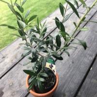 新たなベースの植物。