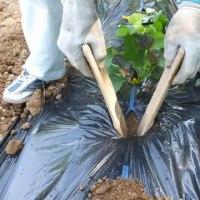 サツマイモ・カヤのバッタ・裏山の堆肥