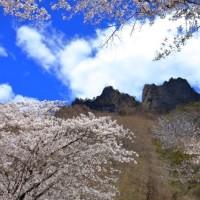 妙義山の桜はいつ見ても素晴らしい