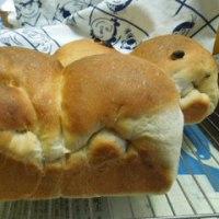 ミニ食パンを焼く