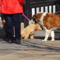 犬を散歩さす人のマナーに一言…喝!!