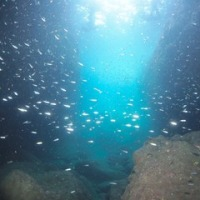 青の洞窟にボートファンダイビング、ライセンス講習も~♪♪