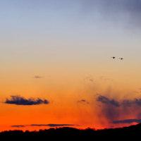 夕景に・・白鳥・・。
