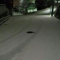 元気いっぱいの雪