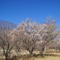 初春の兆しを思わせた武蔵野公園です その4