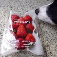 あまおう苺