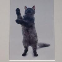 世界一美しい猫たち