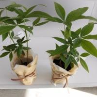 植物その2