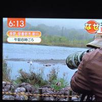 10/21 昨日は夏と冬が日本にあった こちらは白鳥が着いた町