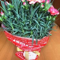 母の日に貰ったお花(*^_^*)