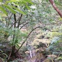 日高小村神社と中津渓谷に行ってきました\(^_^)/