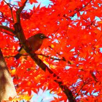 『季節の色』 裏紅葉