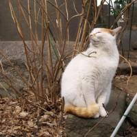 シロちゃんは二重猫格