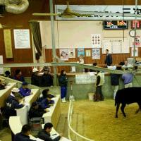 12月も子牛を出荷しました