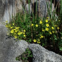 平尾台の花たち 22日