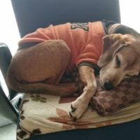 犬さんの寝る場所