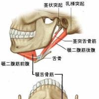 下顎の突き出しができない患者の針灸治験