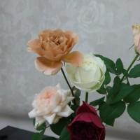 きれいなバラの色