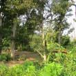 耕作放棄地からバラ園へ 2017 .7.22