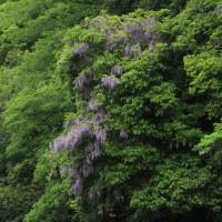 好きな花(段戸湖)