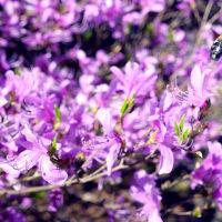春の654散策