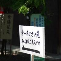 藤森神社のあじさい祭り