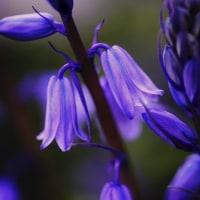 青紫色が花盛り 猫の額の庭便り