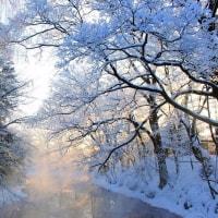 春を告げる大きな姿に・・・ 樹氷の森