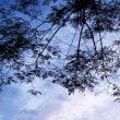 絡まる木々の影