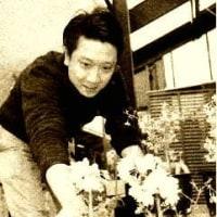 川沿いの桜が見られなくなったから・・・桜の盆栽でも眺める?!( ^)o(^ )