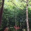 蓼科の「空気感」に感動、野生の鹿・春蝉の鳴き声に豊かな自然を肌身に