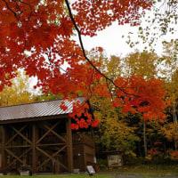 今がキレイですよ~! Colored leaves