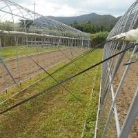 ハウスの耕うんと台風対策