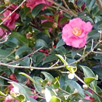 1/4_長府庭園