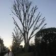 切り絵の木々