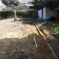 庭のメジロ