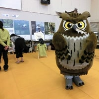 エコフェアに出展した釧路キノコの会のコーナー