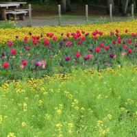 春のお花畑!!