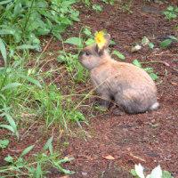 ★ ウサギ姫に恋して=野尻湖、忘れ得ぬひと夏の思い出