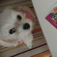 妖怪ウォッチプリペイドカード