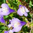 ポエム161 『紫鷺苔とチルチルミチル』