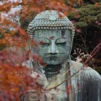 鎌倉 秋色 2016